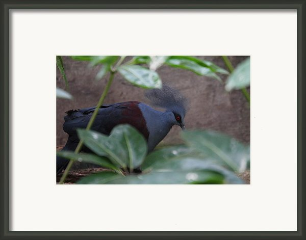 National Zoo - Birds - 011329 Framed Print By Dc Photographer