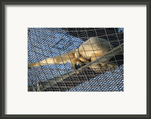 National Zoo - Large Mammal - 12121 Framed Print By Dc Photographer