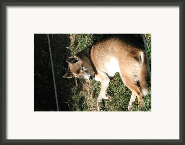 National Zoo - Mammal - 12124 Framed Print By Dc Photographer