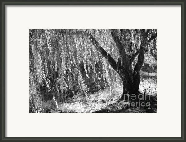 Natural Screen Framed Print By Gerlinde Keating - Keating Associates Inc