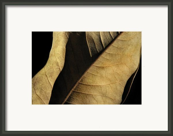 Natural Seduction Framed Print By Dan Holm