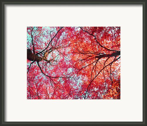 Nature Abstract #1 - Colorful Red And Blue Abstract Nature Fine Art Photograph - Digital Painting Framed Print By Artecco Fine Art Photography - Photograph By Nadja Drieling