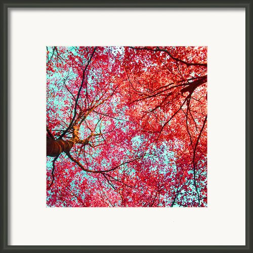 Nature Abstract #2 - Colorful Red And Blue Abstract Nature Fine Art Photograph - Digital Painting  Framed Print By Artecco Fine Art Photography - Photograph By Nadja Drieling