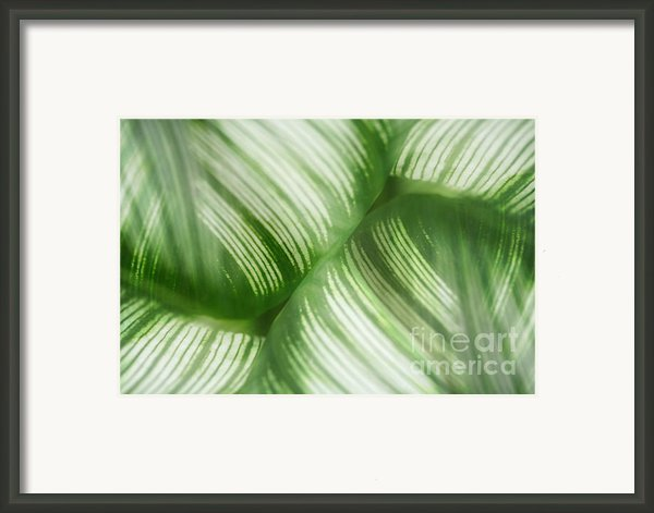 Nature Leaves Abstract In Green 2 Framed Print By Natalie Kinnear