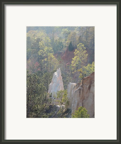 Nature Struggles Framed Print By Kim Pate