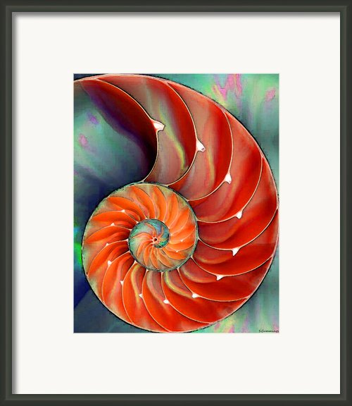 Nautilus Shell - Nature