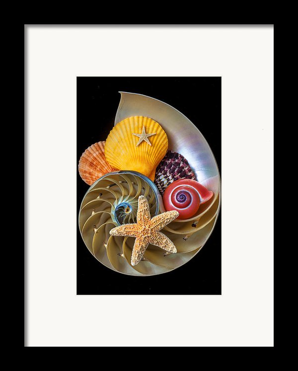 Nautilus With Sea Shells Framed Print By Garry Gay