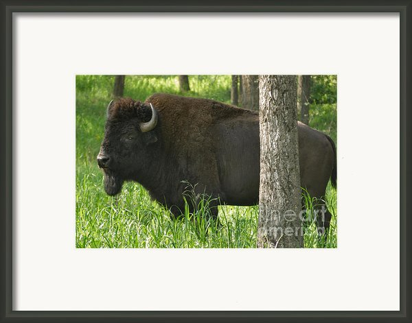 Needs A Bigger Hiding Spot Framed Print By Charles Kozierok