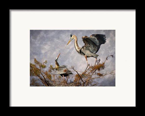 Nesting Time Framed Print By Debra And Dave Vanderlaan