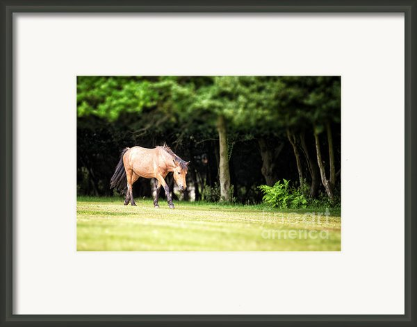 New Forest Pony Framed Print By Jane Rix