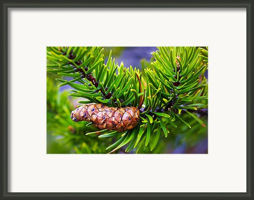 Next Generation Framed Print By Abeautifulsky  Photography