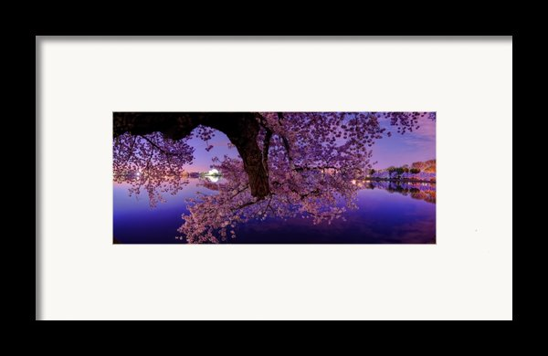 Night Blossoms Framed Print By Metro Dc Photography