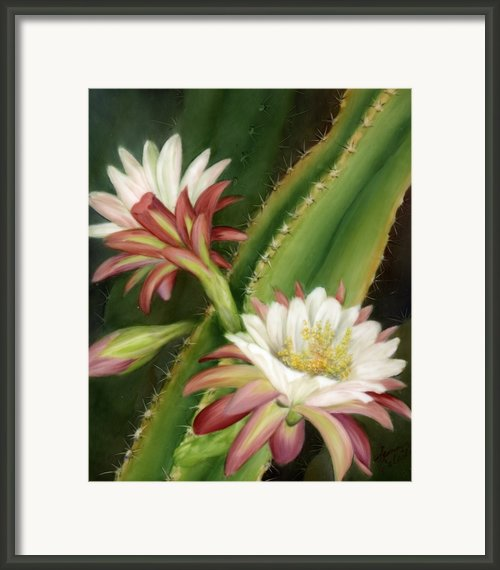 Night Cereus Framed Print By Summer Celeste