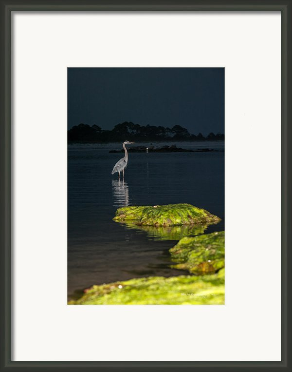Night Stalker Framed Print By Volker Blu Firnkes