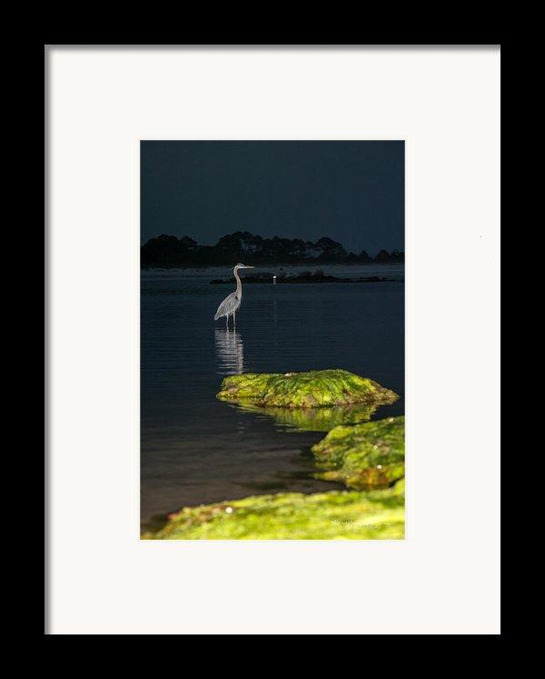 Night Stalker Framed Print By Volker Blu Firnkes