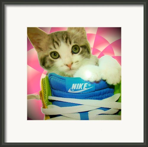 Nike Kitten Framed Print By Alexandria Johnson