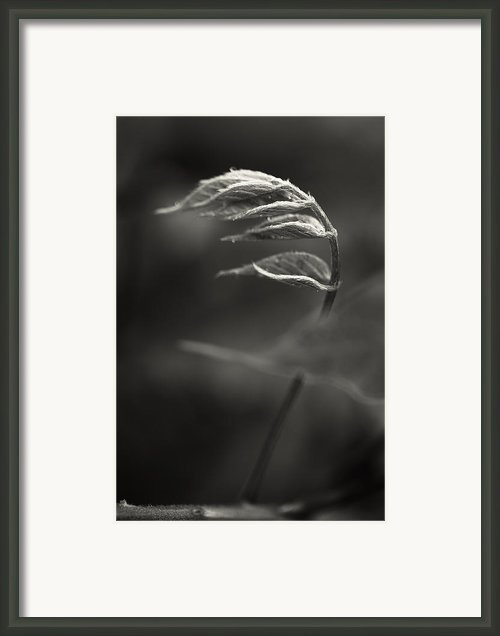 Nike Of Samothrace Framed Print By Valentina Bunic