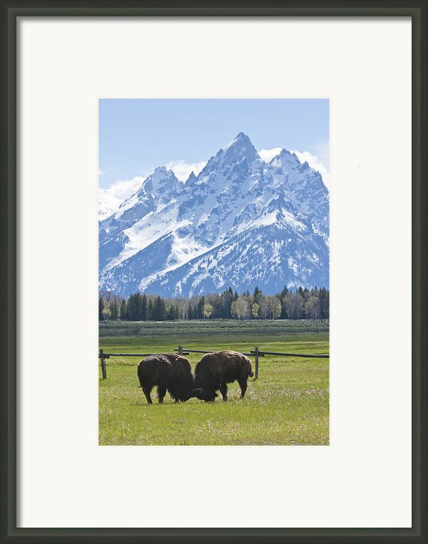 No Butts About It Framed Print By Charles Warren