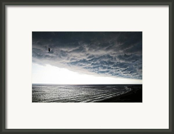 No Fear - Beach Art By Sharon Cummings Framed Print By Sharon Cummings