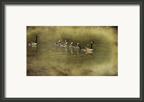No Time For Stragglers Framed Print By Diane Schuster