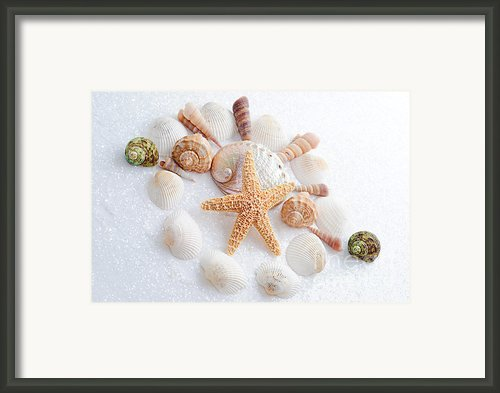 North Carolina Sea Shells Framed Print By Andee Photography