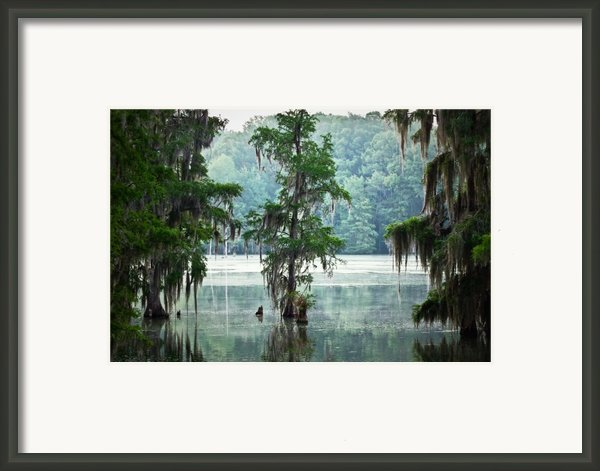 North Florida Cypress Swamp Framed Print By Rich Leighton