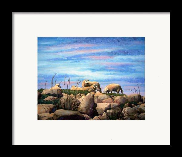 Norwegian Sheep Framed Print By Janet King