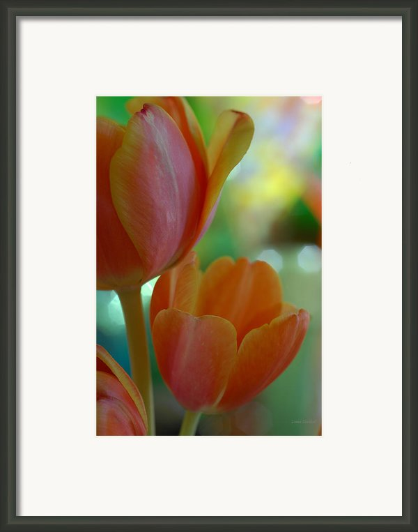 Nothing As Sweet As Your Tulips Framed Print By Donna Blackhall
