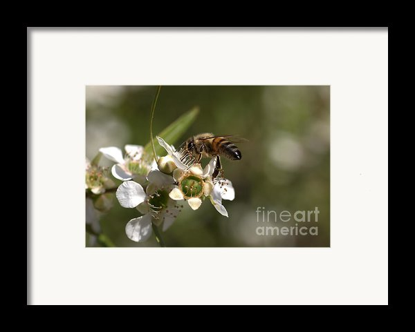 Nourishment Framed Print By Joy Watson