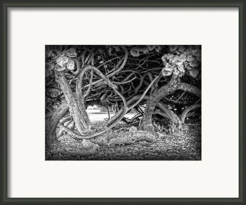 Oahu Ground Vines - Hawaii Framed Print By Daniel Hagerman