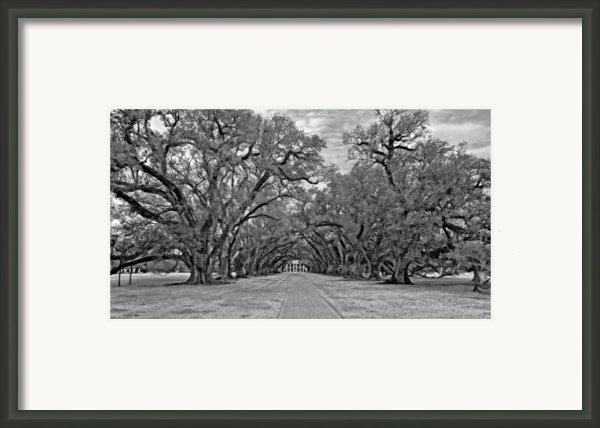 Oak Alley 3 Monochrome Framed Print By Steve Harrington