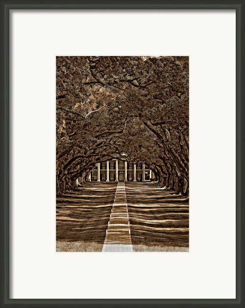 Oak Alley Bw Framed Print By Steve Harrington