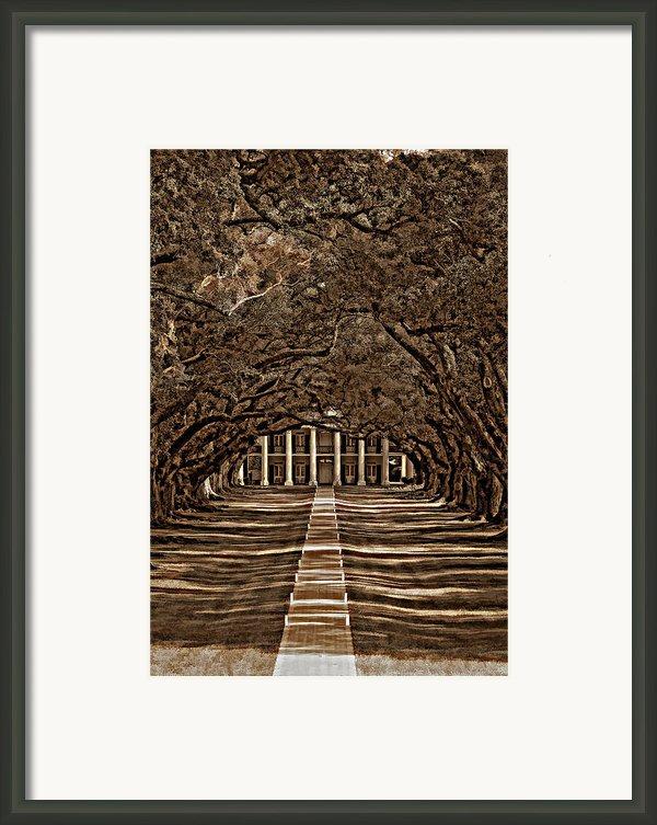 Oak Alley Bw Framed Print By Steve Harrington