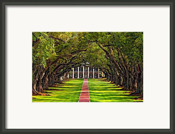 Oak Alley Framed Print By Steve Harrington