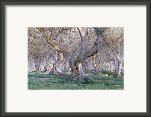 Oak Grove Framed Print By Gunnar Widforss
