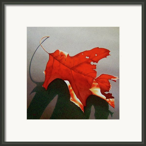 Oak Leaf 1 Framed Print By Timothy Jones
