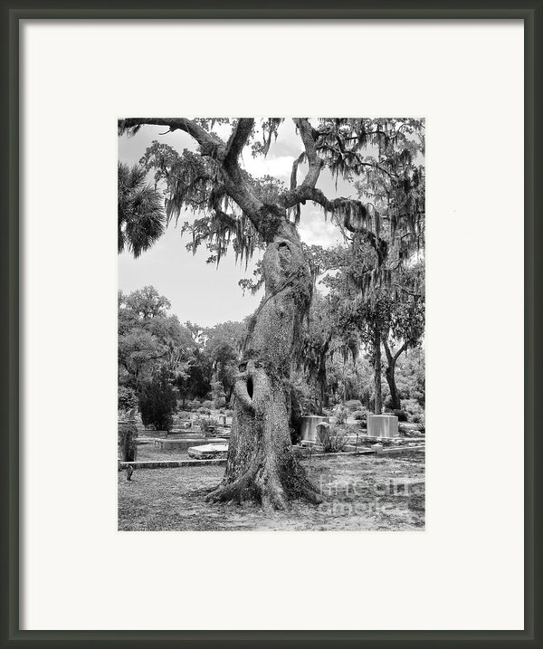 Oak Tree With A Face 2 Framed Print By Victoria Lakes