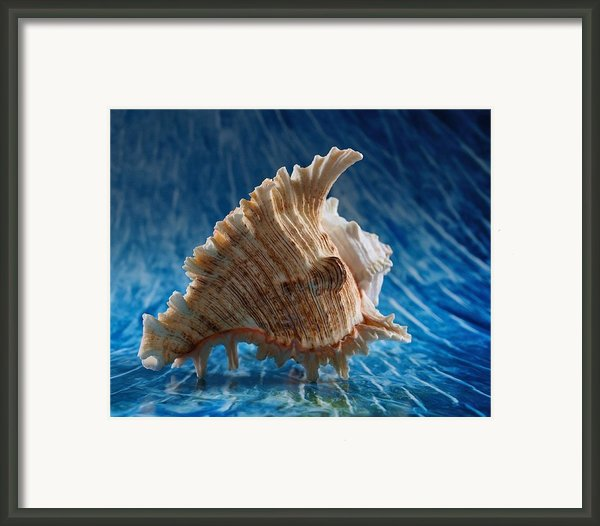 Ocean Breeze 2 Framed Print By Tom Druin