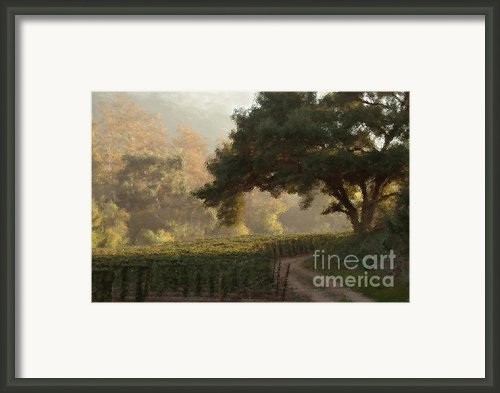 Ojai Vineyard Framed Print By Kathleen Gauthier