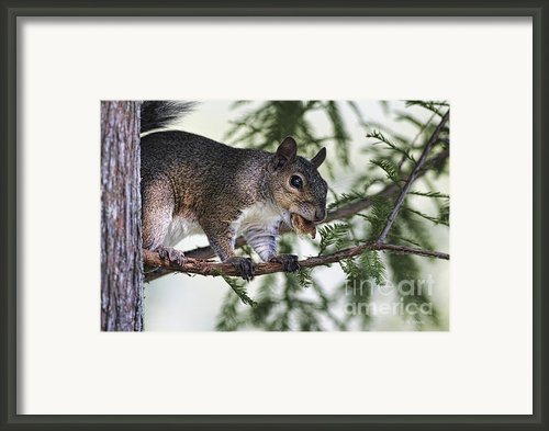Ok You Caught Me Framed Print By Deborah Benoit