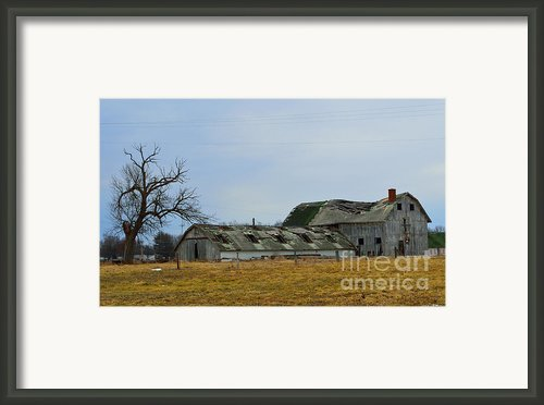 Old Barns In The Heartland Framed Print By Alys Caviness-gober