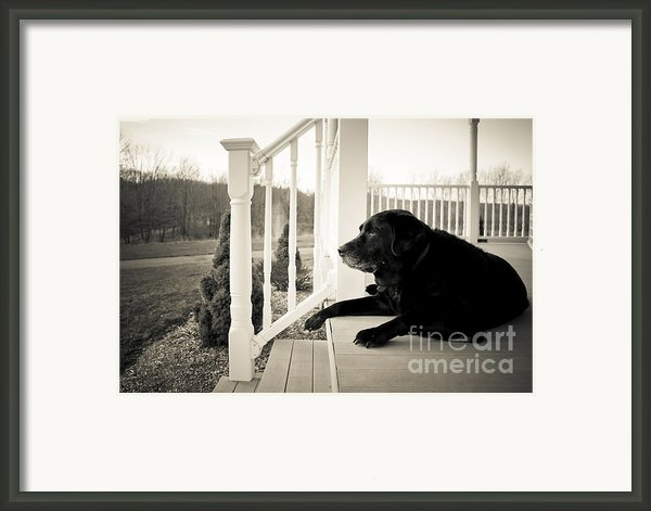 Old Dog On A Front Porch Framed Print By Diane Diederich