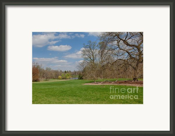 Old Elm Haverford College Framed Print By Kay Pickens