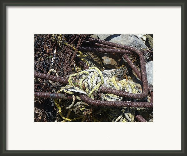 Old Trap  Framed Print By Minnie Lippiatt