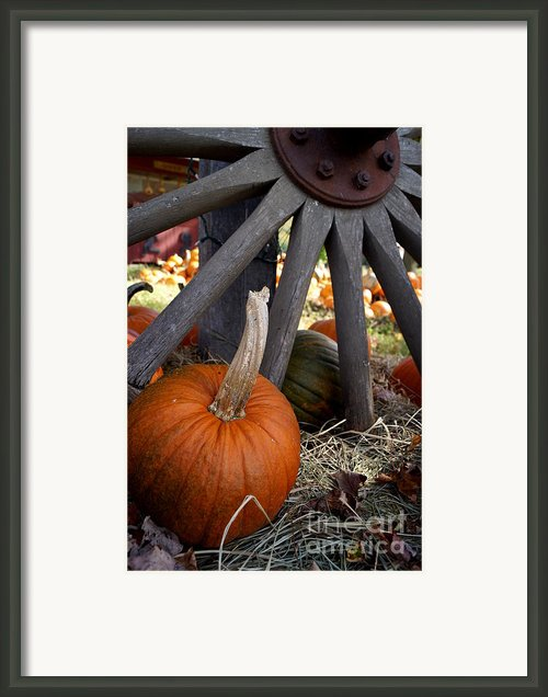 Old Wheel Pumpkin Framed Print By Kerri Mortenson