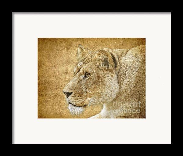 On Target Framed Print By Steve Mckinzie