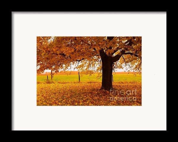 One Autumn Tree Framed Print By Terri Gostola