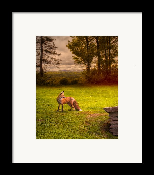 One Red Fox Framed Print By Bob Orsillo
