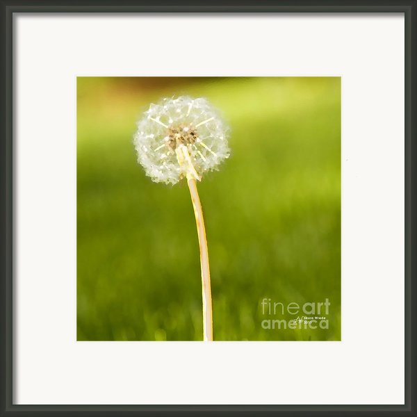 One Wish  Framed Print By Artist And Photographer Laura Wrede