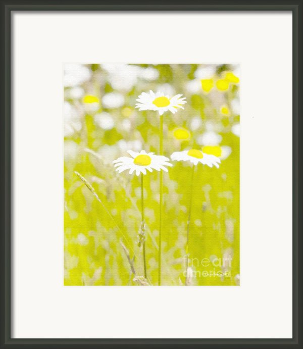 Oopsy Daisy Framed Print By Artist And Photographer Laura Wrede